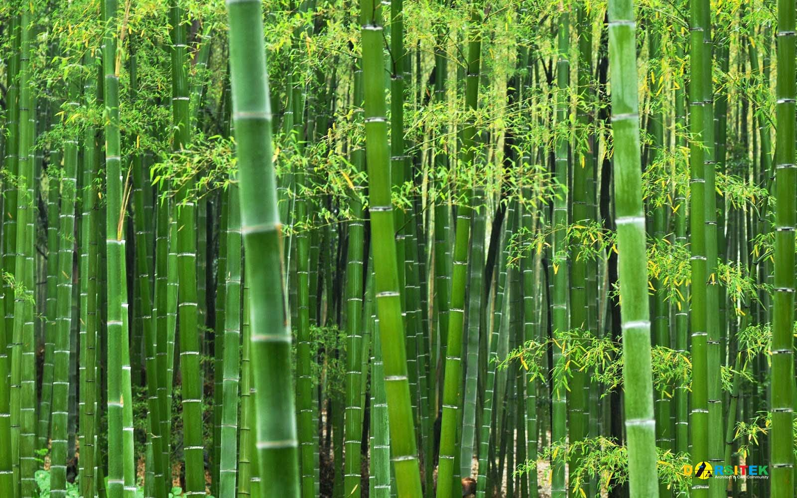 struktur bambu