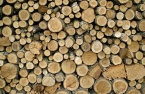 jenis kayu untuk konstruksi rumah